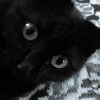 Муркины  глаза :: galina tihonova