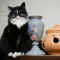 Кошка для интерьера ))) :: Андрей Зайцев