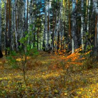 Осень :: Александр Подгорный
