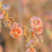 Полевые цветы :: Борис