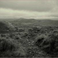Одинокая овечка... :: Пётр Галилеев