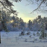На закате дня! :: Владимир Шошин