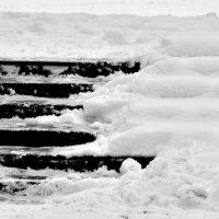 Black & White :: alexander zvir