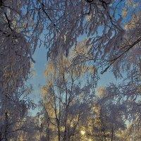 Зимний вечер :: Анатолий Иргл