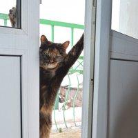 Можно мне уже войти-то?! :: Роман Пацкевич