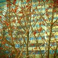 Деревья города :: лоретта