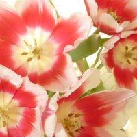 Весна должа повториться..(Саша Чёрный -Под сурдинку) :: Alexey YakovLev