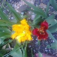 Квіти :: Танюша
