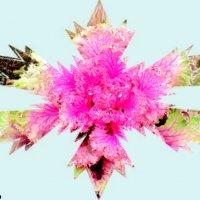 Декоративная капуста :: Нина Бутко