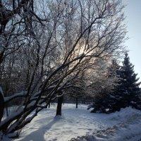 Зима в городе :: BoxerMak Mak