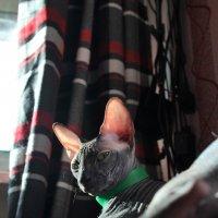 Мой кот :: Марина Влади-на