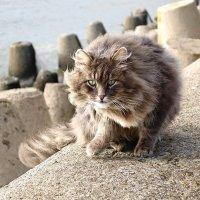 Котишка на Набережной :: Маргарита Батырева