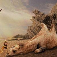 В мире животных :: Анастасия сосновская