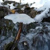 Ледяной гриб :: Василий Ворона