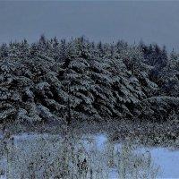 """""""Задумчивым и чистым стоит над снегом лес"""" (из песни) :: veilins veilins"""