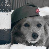 Поздравляю с праздником мужественных и отважных! :: Татьяна Помогалова