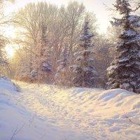 Укутул снег мохнатым покрывалом... :: Елена Ярова