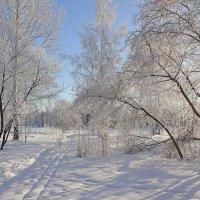 Вот зима рисует мелом белым, набело, на белом!.. :: Елена Ярова