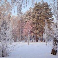 Спит в сказке волшебной притихший лес... :: Елена Ярова