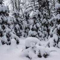 Зимний лес :: Владимир Орлов