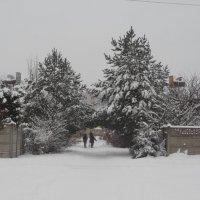 Аллея зимой :: Татьяна