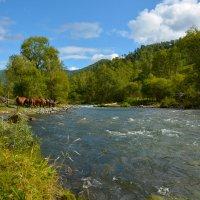 Лошадки у реки. :: Валерий Медведев