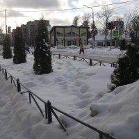 Молодые деревца :: Svetlana Lyaxovich