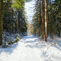 Катыньский лес :: Милешкин Владимир Алексеевич