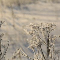 Зимний хрусталь :: ninell nikitina