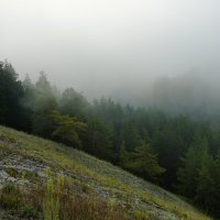 Туманный склон :: Ольга Чистякова