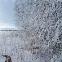 Здравствуй, солнечный февраль! :: liudmila drake