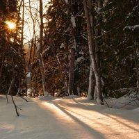 Зимнее утро :: Sergey