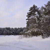 Прогулка на природе :: Viktor Pjankov