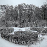 Зимний сад :: Денис Масленников