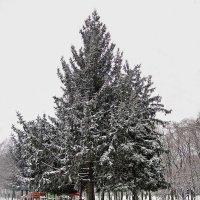зима нечаянно настала в последних числах февраля :: Александр Корчемный