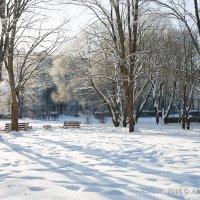 Зимнее утро... идет февраль... :: Алексей Сопельняк