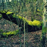 Лесной крокодил :: Marika Hexe