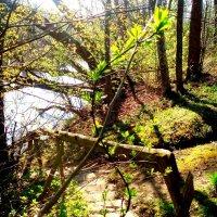 Šviesa ir šešėliai / Light and shadow :: silvestras gaiziunas