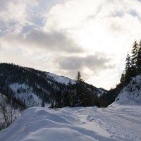 зимний пейзаж :: Светлана Бурлина