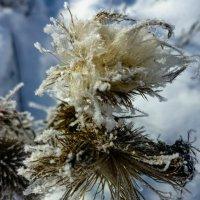 Зимние цветы :: Михаил