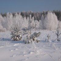 В лесу :: ГАЛИНА Баранова