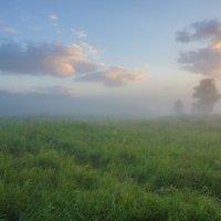 Утра раннего свежесть туманов... :: Igor Andreev