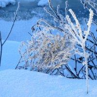 зимняя икебана :: Михаил Жуковский