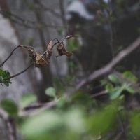 Среди новой весны всегда есть отголоски прошлой осени... :: Оксана Задвинская