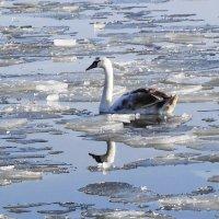Затерявшийся во льдах :: Маргарита Батырева
