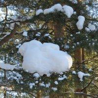Зима в лесу :: Вера Щукина