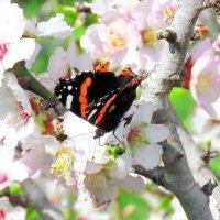Весна идет .. :: Николай Волков