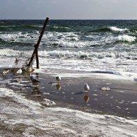 чайки на берегу :: Александр Корчемный