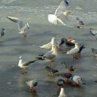 Голодные пташки :: Сергей Карачин