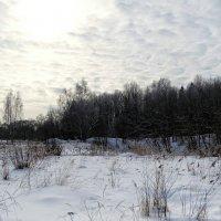 В холодный февральский день :: Милешкин Владимир Алексеевич